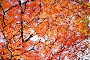 根来寺の紅葉の写真素材 [FYI03816902]