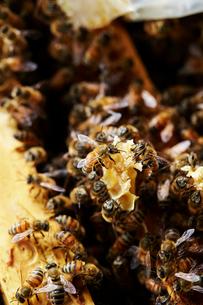 養蜂の写真素材 [FYI03816962]
