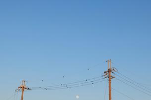 夕暮れの空 電線と月の写真素材 [FYI03817062]