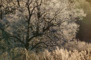 霧氷の写真素材 [FYI03817443]