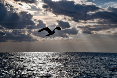 Seagull flying over the seaの写真素材 [FYI03817471]