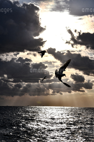 Seagulls flying over the seaの写真素材 [FYI03817472]