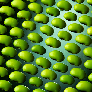 Edamame green soybeans on green backgroundの写真素材 [FYI03817486]