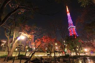 芝公園と東京タワーの夜景の写真素材 [FYI03817648]