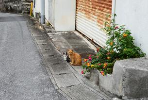 路地裏の二匹の猫とランタナの花の写真素材 [FYI03817808]