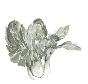 チンゲン菜 水彩 水墨画風 モノトーン 野菜 素材のイラスト素材 [FYI03817864]