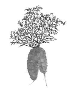 葉つき人参 水彩 水墨画風 野菜 素材 モノトーンのイラスト素材 [FYI03817866]