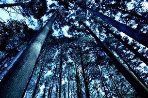 森の中の写真素材 [FYI03817907]