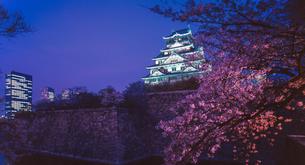大阪城公園と夜桜の写真素材 [FYI03817914]