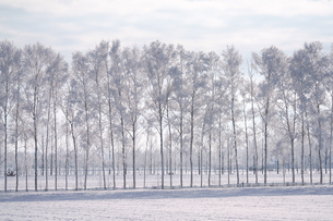 霧氷の写真素材 [FYI03817952]