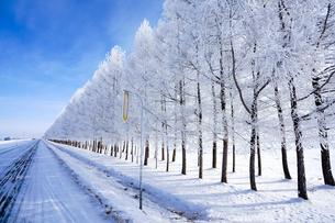 霧氷と青空の写真素材 [FYI03817953]
