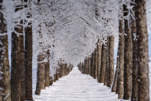 霧氷の写真素材 [FYI03817955]