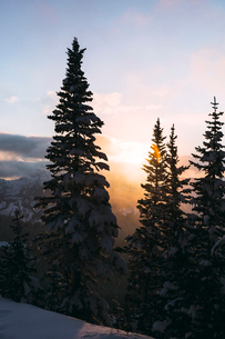 Tranquil view of snow covered trees against sky during sunriseの写真素材 [FYI03819445]
