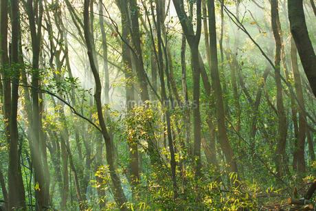 朝の森の写真素材 [FYI03819866]