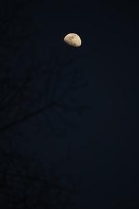 上弦の月がある風景の写真素材 [FYI03820065]