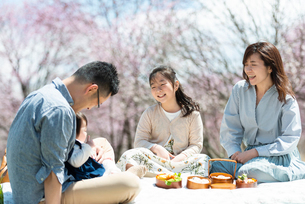 お花見を楽しむ家族の写真素材 [FYI03820149]