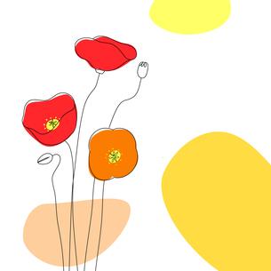 ポピーの線画と背景のイラスト素材 [FYI03820290]