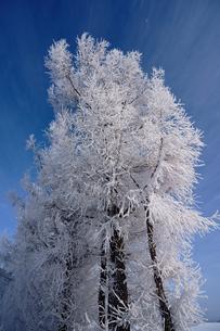 霧氷と青空の写真素材 [FYI03820370]