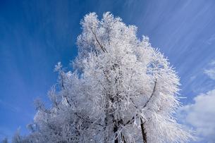 霧氷と青空の写真素材 [FYI03820371]