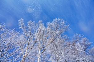 霧氷と青空の写真素材 [FYI03820372]