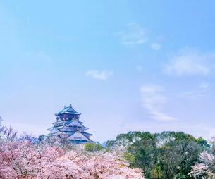 大阪城と桜と青空の写真素材 [FYI03820836]