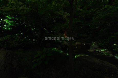 鶴岡八幡宮の蛍の写真素材 [FYI03820990]