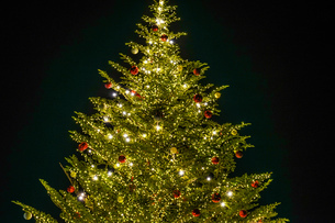 ピカピカ光るクリスマスツリー(クリスマスマーケット)の写真素材 [FYI03821084]