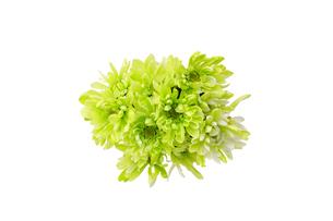 菊の花束の写真素材 [FYI03821144]