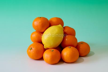 ミカンとレモンの写真素材 [FYI03821146]