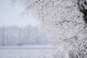 霧氷の写真素材 [FYI03821155]