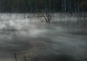 静寂の晩秋の朝もやの自然湖の写真素材 [FYI03821196]