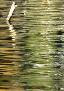 艶やかな湖岸の水模の写真素材 [FYI03821197]