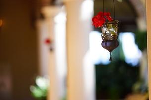 花のランプの写真素材 [FYI03821213]