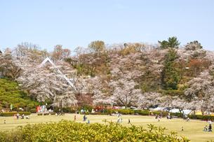桜の公園の写真素材 [FYI03821226]