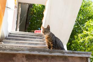 イスタンブール 下から見上げた階段のネコの写真素材 [FYI03821394]