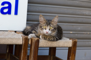 イスタンブール旧市街 商店街のネコの写真素材 [FYI03821403]