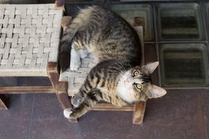 イスタンブール 商店街の椅子に寝転ぶネコの写真素材 [FYI03821408]