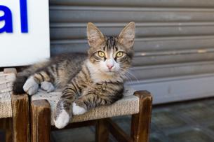 イスタンブールの商店街に暮らす猫の写真素材 [FYI03821412]