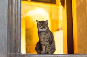 イスタンブール旧市街 アヤソフィアの猫の写真素材 [FYI03821420]