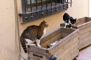 イスタンブール旧市街で遊ぶ二匹の猫の写真素材 [FYI03821454]