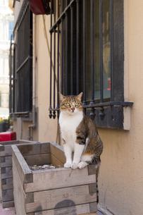 イスタンブール旧市街のキジ白柄の猫の写真素材 [FYI03821459]