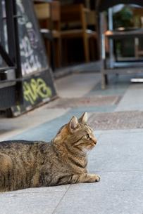 イスタンブール繁華街のキジトラ猫の写真素材 [FYI03821464]