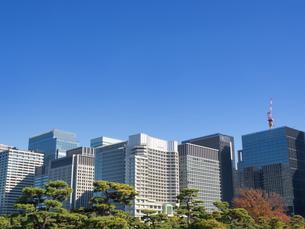 皇居外苑から眺めた丸の内のビル街の写真素材 [FYI03821465]