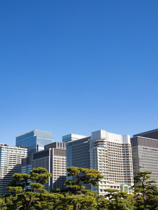 皇居外苑から眺めた丸の内のビル街の写真素材 [FYI03821467]