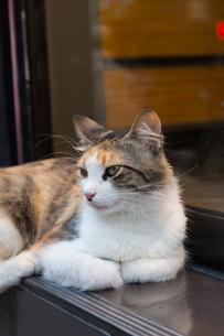 イスタンブール 窓辺に座る三毛猫の写真素材 [FYI03821469]