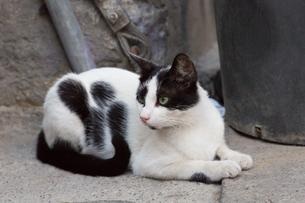 イスタンブール旧市街の黒白ネコの写真素材 [FYI03821473]