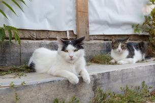 イスタンブール旧市街 二匹の猫の写真素材 [FYI03821491]