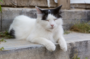 イスタンブール 黒白の長毛ネコの写真素材 [FYI03821493]