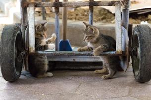 イスタンブール旧市街 遊ぶ二匹の子猫たちの写真素材 [FYI03821513]