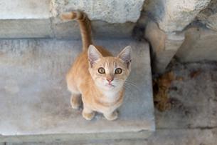 イスタンブール 見上げる子猫の写真素材 [FYI03821521]